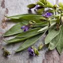 Sage Herb health benefits