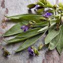 Sage Herb health benefits
