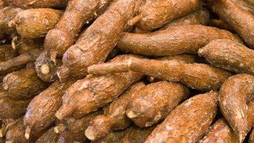 Cassava health benefits