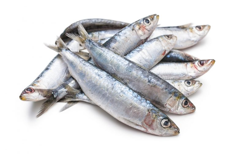 11 Amazing Health Benefits of Sardines