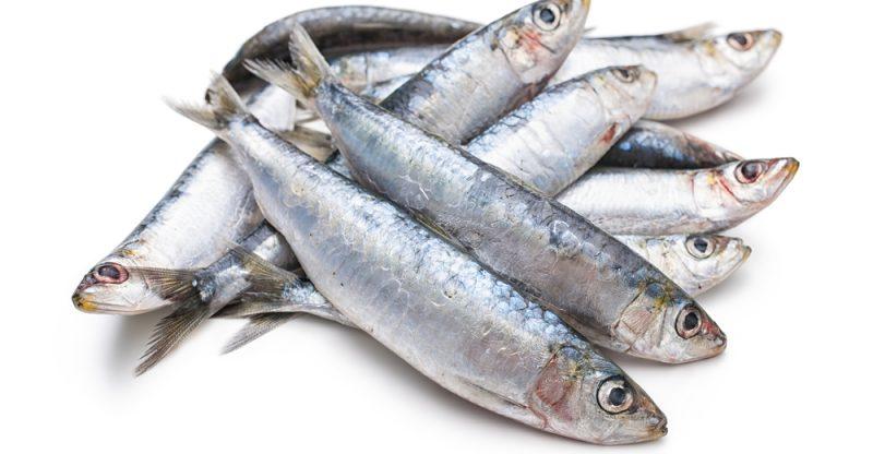 11 Amazing Health Benefits of Sardines