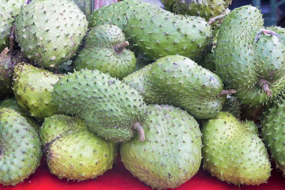 Soursop health benefits