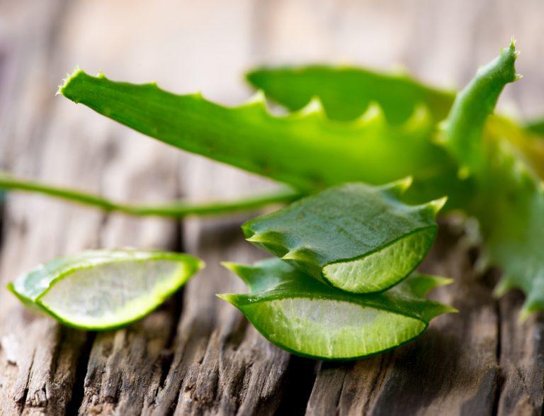 Benefícios à saúde surpreendentes do Aloe Vera