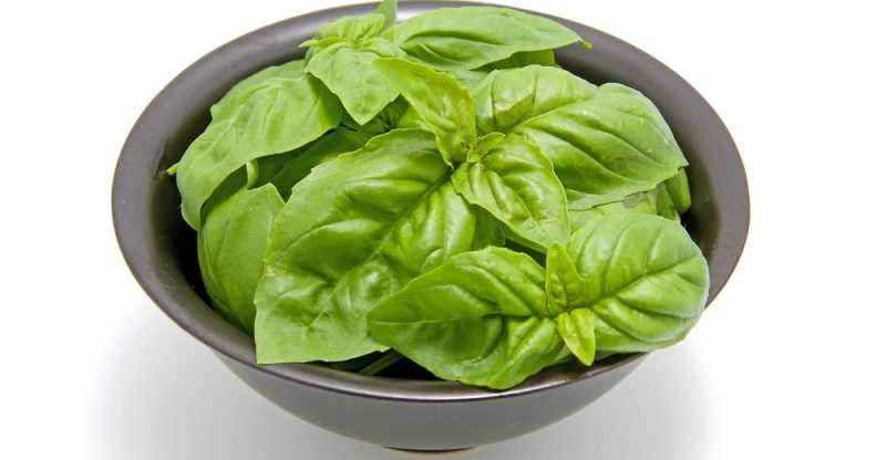Basil leaves health benefits