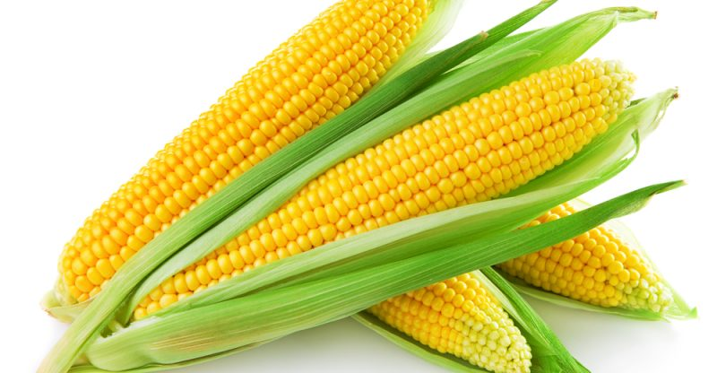 13 amazing health benefits of corn maize natural food series