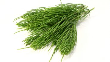 Horsetail health benefits