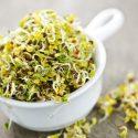 Alfalfa Sprouts health benefits