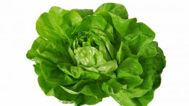 11 Impressive Health Benefits of Lettuce