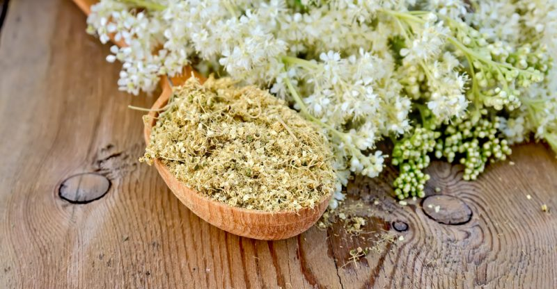 11 Proven Health Benefits of Meadowsweet