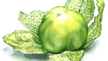 11 Amazing Health Benefits of Tomatillos