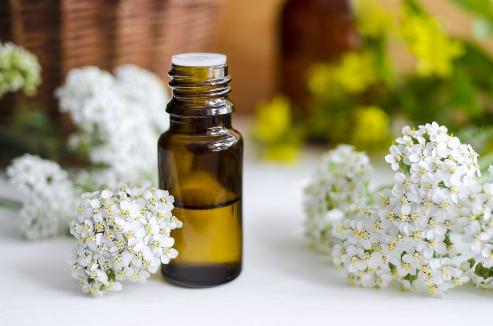 11 Amazing Benefits of Yarrow Essential Oil