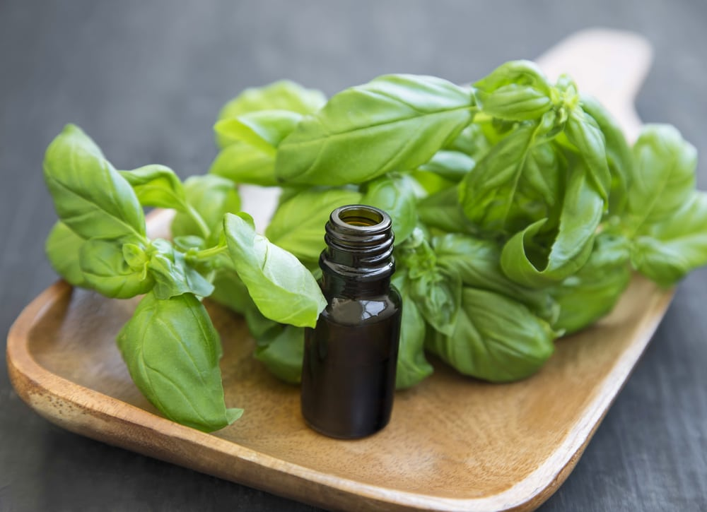11 Impressive Benefits of Basil Essential Oil