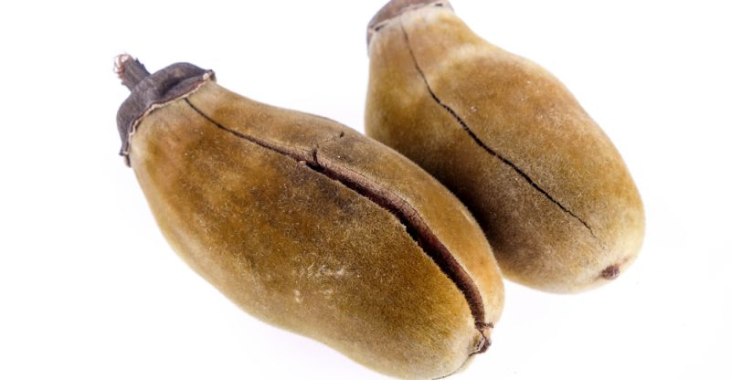11 Impressive Benefits of Baobab
