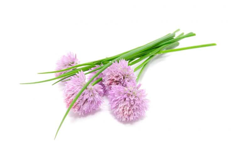 11 Amazing Health Benefits of Chives