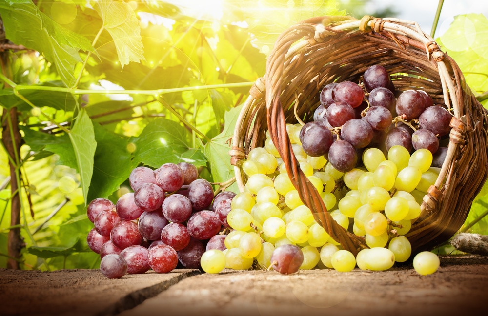 13 Amazing Health Benefits of Grapes
