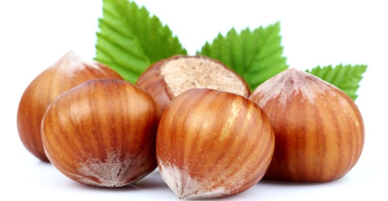 11 Amazing Health Benefits of Hazelnuts