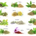 15 Impressive Health Benefits of Herbs