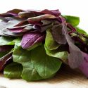 11 Amazing Health Benefits of Orach