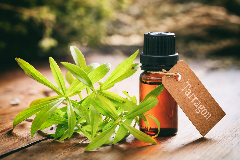 Tarragon Essential Oil health benefits