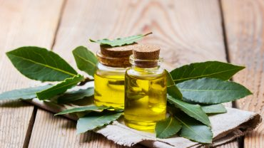 11 Amazing Benefits of Bay Essential Oil