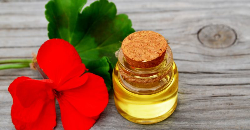 11 Impressive Benefits Of Geranium Essential Oil