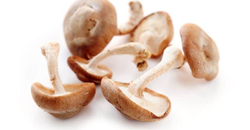 11 Amazing Benefits of Shiitake Mushrooms