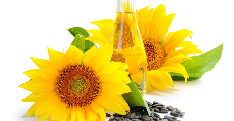 sunflower oil benefits for hair, sunflower oil for skin lightening, sunflower oil benefits and side effects, sunflower oil vs coconut oil, sunflower oil for acne, sunflower oil vs olive oil, sunflower oil for cooking, sunflower oil ingredients,