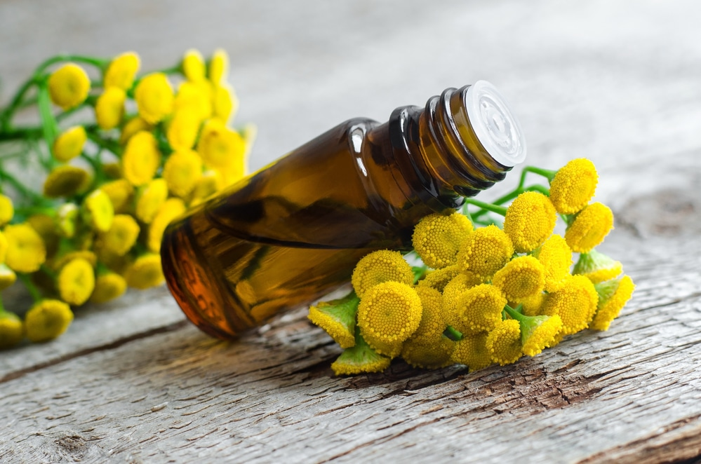 11 Amazing Benefits of Tansy Essential Oil