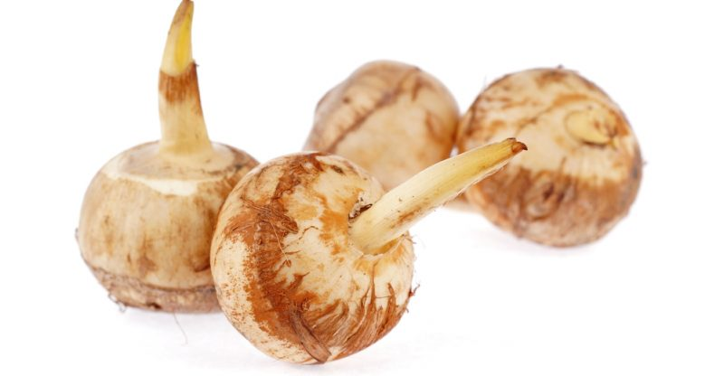 11 Amazing Health Benefits of Arrowroot