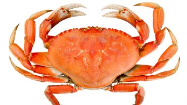 11 Amazing Health Benefits of Eating Crab