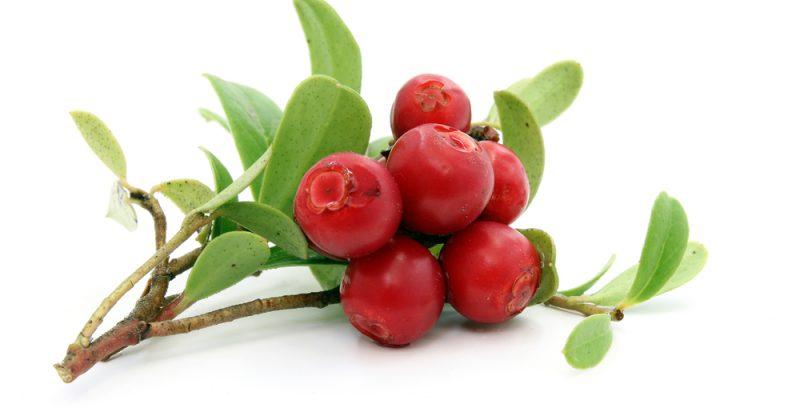 16 Amazing Health Benefits of Crowberries