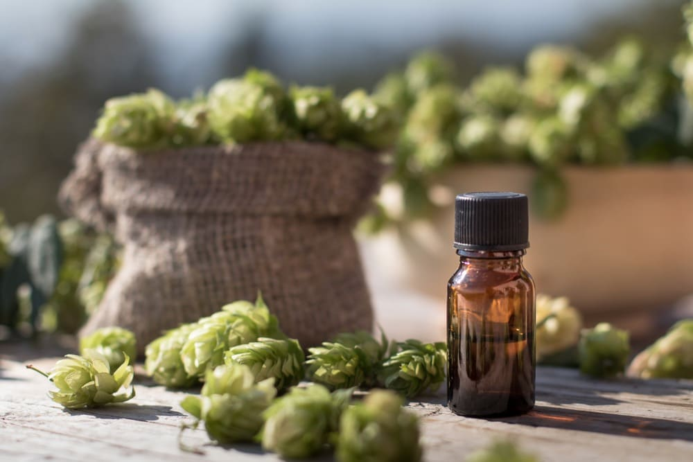 11 Amazing Benefits of Hops Essential Oil