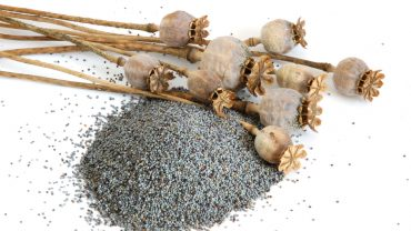 11 Amazing Health Benefits of Poppy Seeds