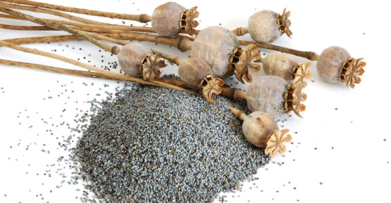 11 Amazing Health Benefits of Poppy Seeds - Natural Food Series