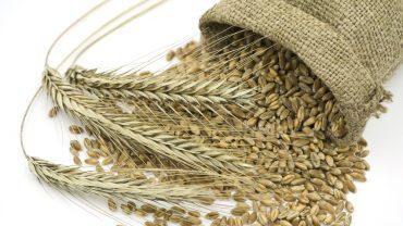 11 Amazing Health Benefits of Rye