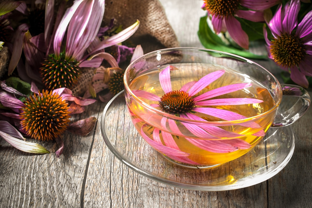 11 Amazing Benefits of Echinacea