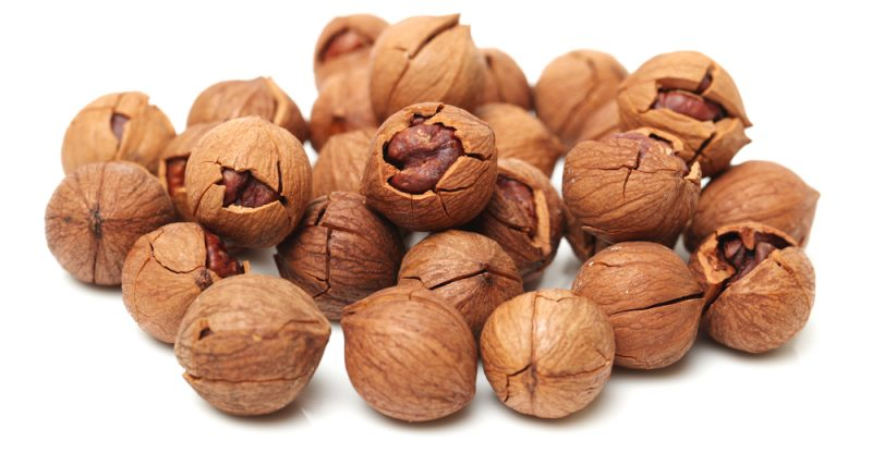11 Amazing Benefits of Hickory Nut