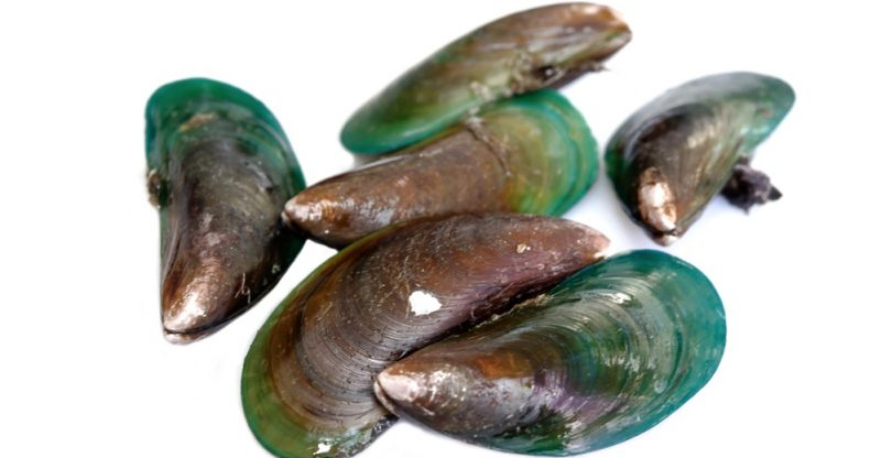 11 Amazing Benefits of Lipped Mussel