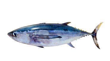 12 Amazing Benefits of Tuna Fish