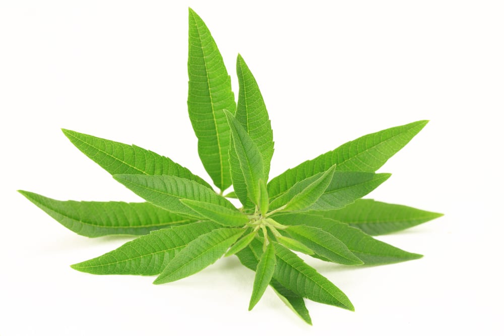 11 Impressive Benefits of Lemon Verbena