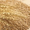 11 Impressive Health Benefits of Triticale