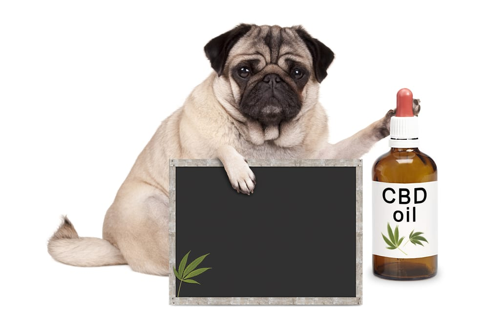 Risks Of CBD Oil