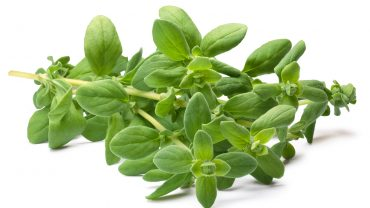 11 Amazing Benefits of Marjoram