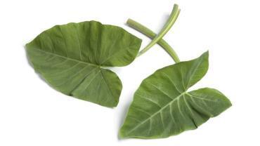 12 Amazing Health Benefits of Taro Leaves