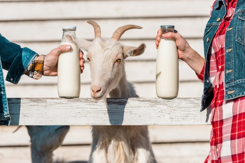 9 Amazing Benefits & Uses of Goat Milk