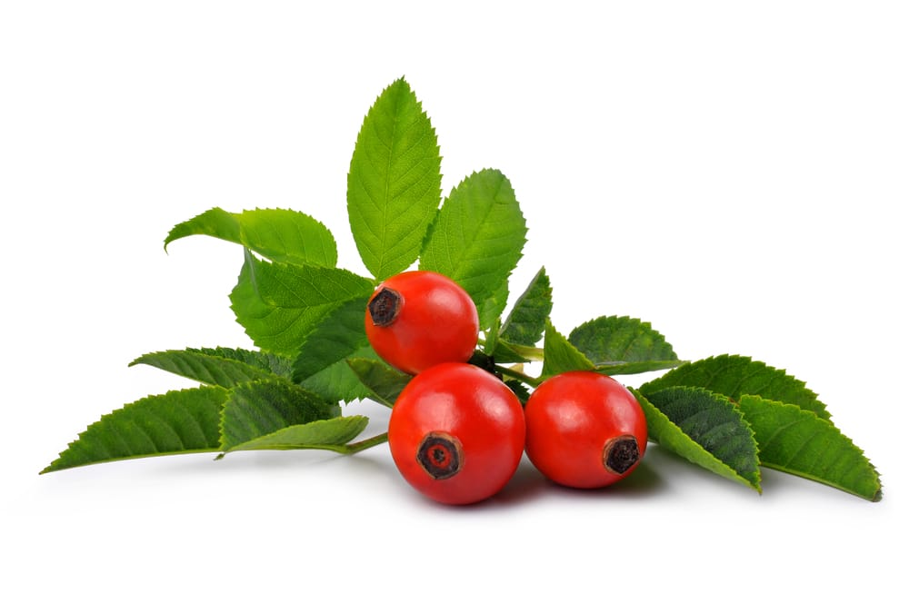 9 Amazing Benefits of Rose Hips